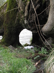 SX22038 Stream flowing through tree trunk.jpg